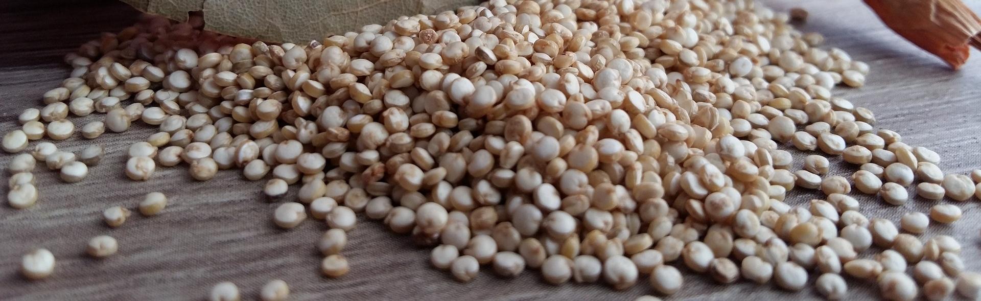 komosa ryżowa pochodzi z Ameryki Południowej