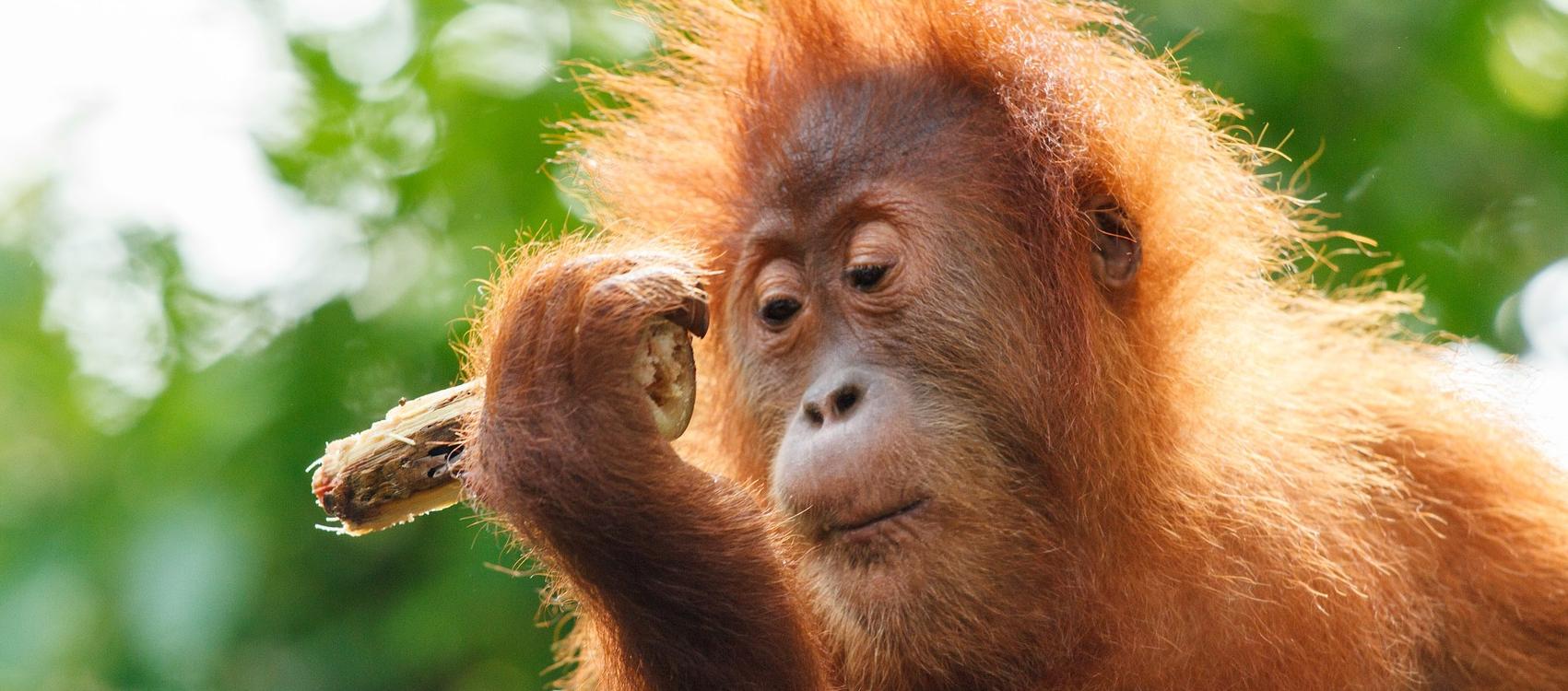 utwardzony olej palmowy jest szkodliwy